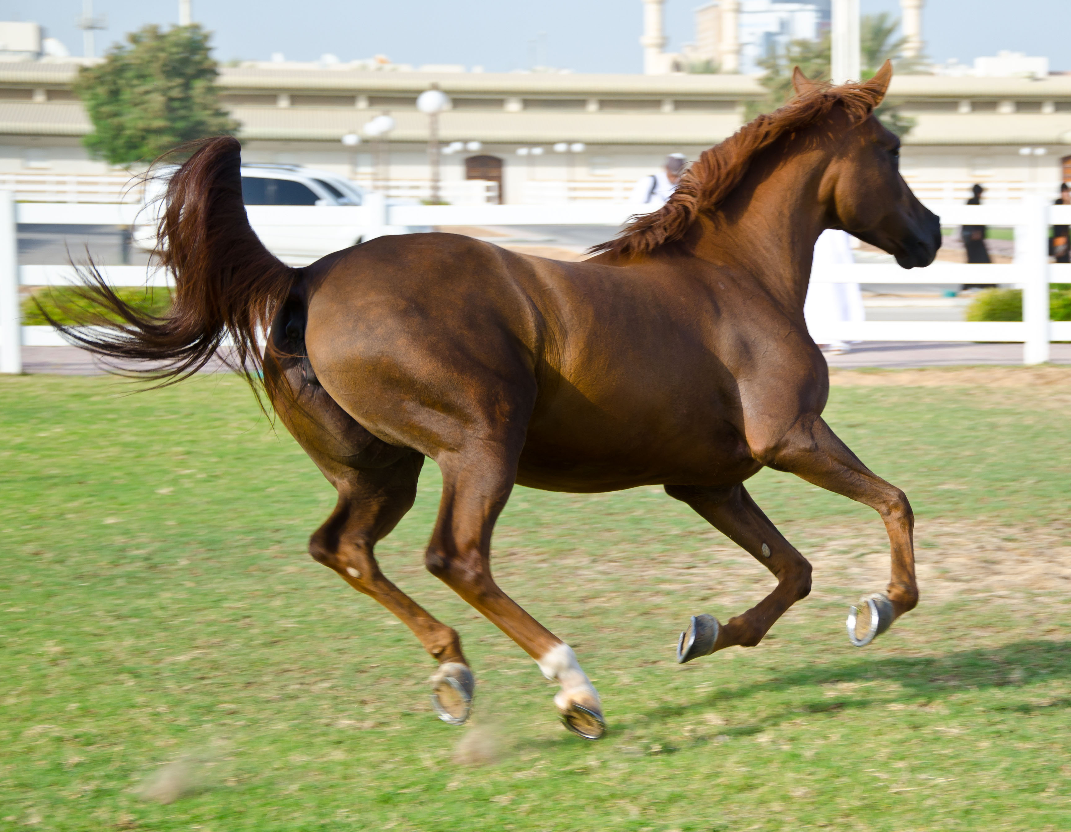 Original Horses running in a green field
